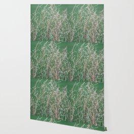 Dry Grass Wallpaper