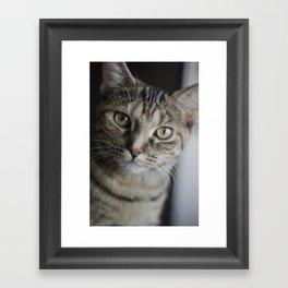 Piccolo the Cat Framed Art Print
