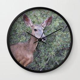 Mule Deer Mama Wall Clock