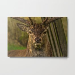 Deer Portrait Metal Print