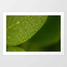 Floral Leaf 05 | Nature Photography Art Print