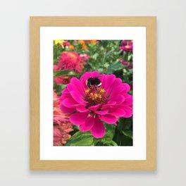 Pollen Covered Bee Framed Art Print