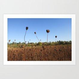 Early Fall Field Art Print