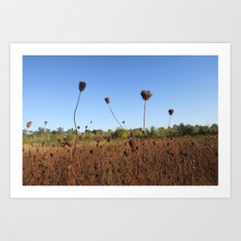 Early Fall Field Art Print