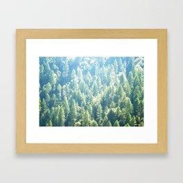 California trees Framed Art Print