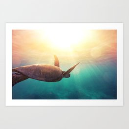 Sea Turtle - Underwater Nature Photography Art Print