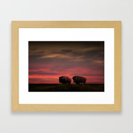 Two American Buffalo Bison at Sunset Framed Art Print