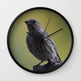 An Immature House Finch Wall Clock