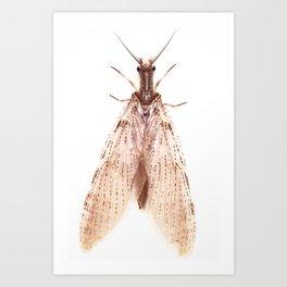 Mysterius Insectus Art Print