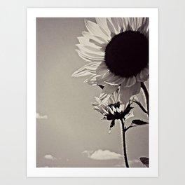 My Mother's Sunflowers Art Print