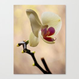 An Orchid For  Your Mom Canvas Print