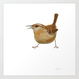 Carolina Wren Art Print