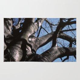 maple tree in winter Rug