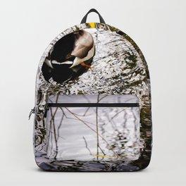 Three mallard ducks in a pond Backpack
