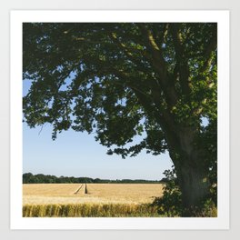 Field of barley and Oak tree in evening light. Norfolk, UK Art Print