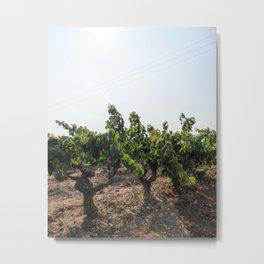 Spanish Vineyard Metal Print