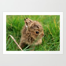 Leveret In The Grass Art Print