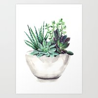 succulents Art Prints featuring Succulents by Bridget Davidson