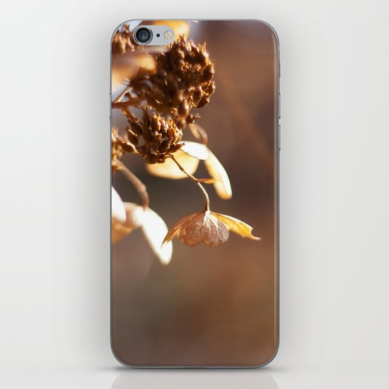 Butterflies in December iPhone & iPod Skin
