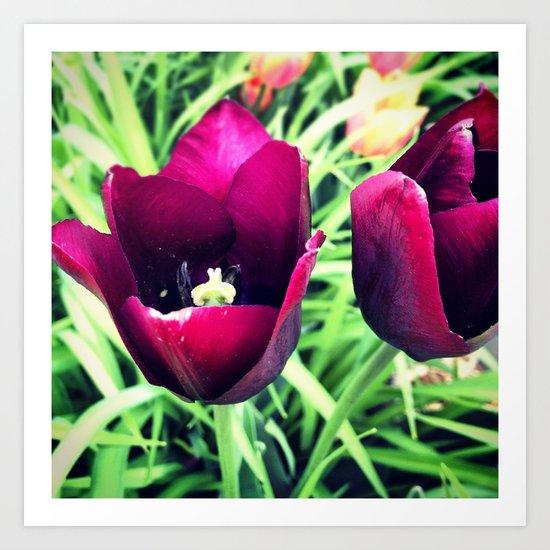 Purple Tulips in Bloom Art Print