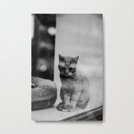 Cat In The Mirror Metal Print