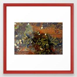 Tidal Pools #1 Framed Art Print