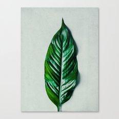 Green Leaf 1 Canvas Print