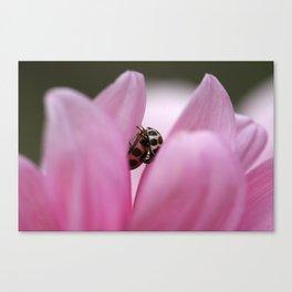 Pink Petal Love Canvas Print