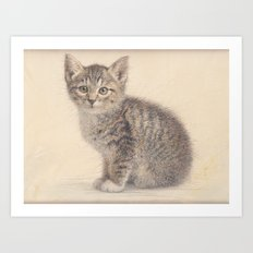 Gray kitty  Art Print