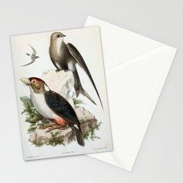 cypselus sharpei (Lat.) Pogonorhynchus Eogaster (Lat.)3 Stationery Cards