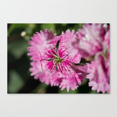 Centered Clarity Canvas Print