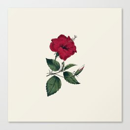 Vintage ivory white red green botanical flower Canvas Print