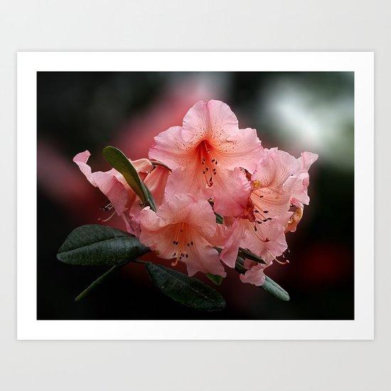 Tortoiseshell Wonder Rhododendron Art Print