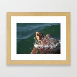 Loggerhead Turtle (Caretta Caretta) Breaking The Sea Surface Framed Art Print