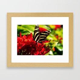 Zebra Longwing Butterfly Framed Art Print