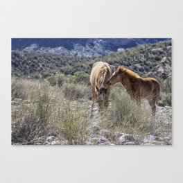 Salt River Mare and Her Colt, No. 1 Canvas Print