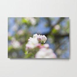 Spring apple tree Metal Print