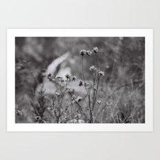 Wilting Flowers Art Print