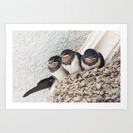 Swallow nestlings sitting in nest Art Print