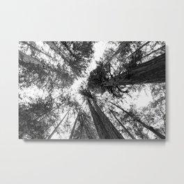 Muir Woods - California Metal Print