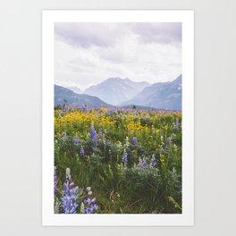 Waterton Wildflowers Art Print