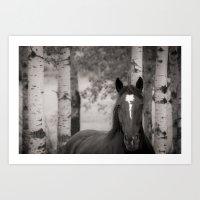 Horse in Birch Trees Art Print