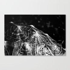 Black Shells Canvas Print