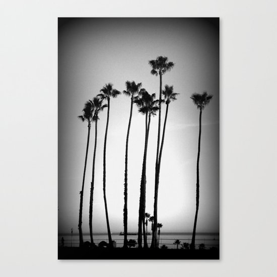 palm trees land Canvas Print