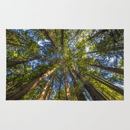 Coastal Redwoods aka Coast Redwood and California Redwood (Sequoia sempervirens) Rug