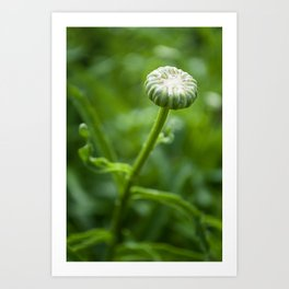 Petit Bouton (Little Bud) by Althéa Photo Art Print