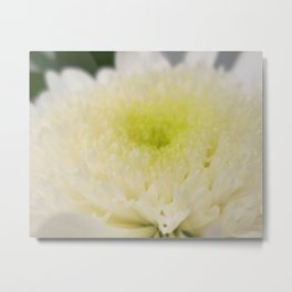 Beautiful Ivory Flower (macro) Metal Print