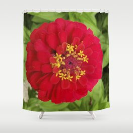 Red, RED Zinnia Shower Curtain