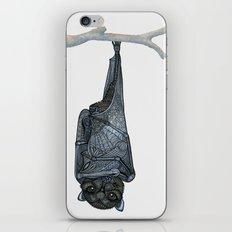 Inquisitive Bat iPhone & iPod Skin