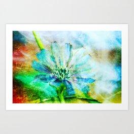 Chicory Flower Art Print